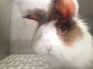 rabbit 1 (5)