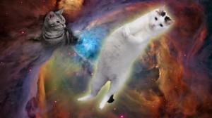 cat_wp01