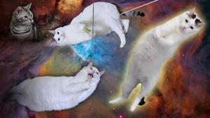 cat_wp03