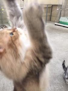 ネコじゃらし12