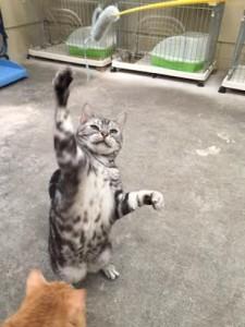 ネコじゃらし3