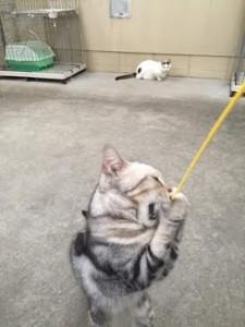 ネコじゃらし13