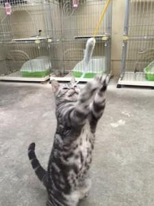 ネコじゃらし5