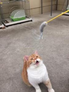 ネコじゃらし10