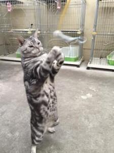 ネコじゃらし6