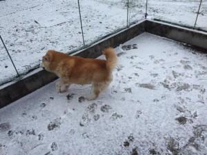雪とタロウ3