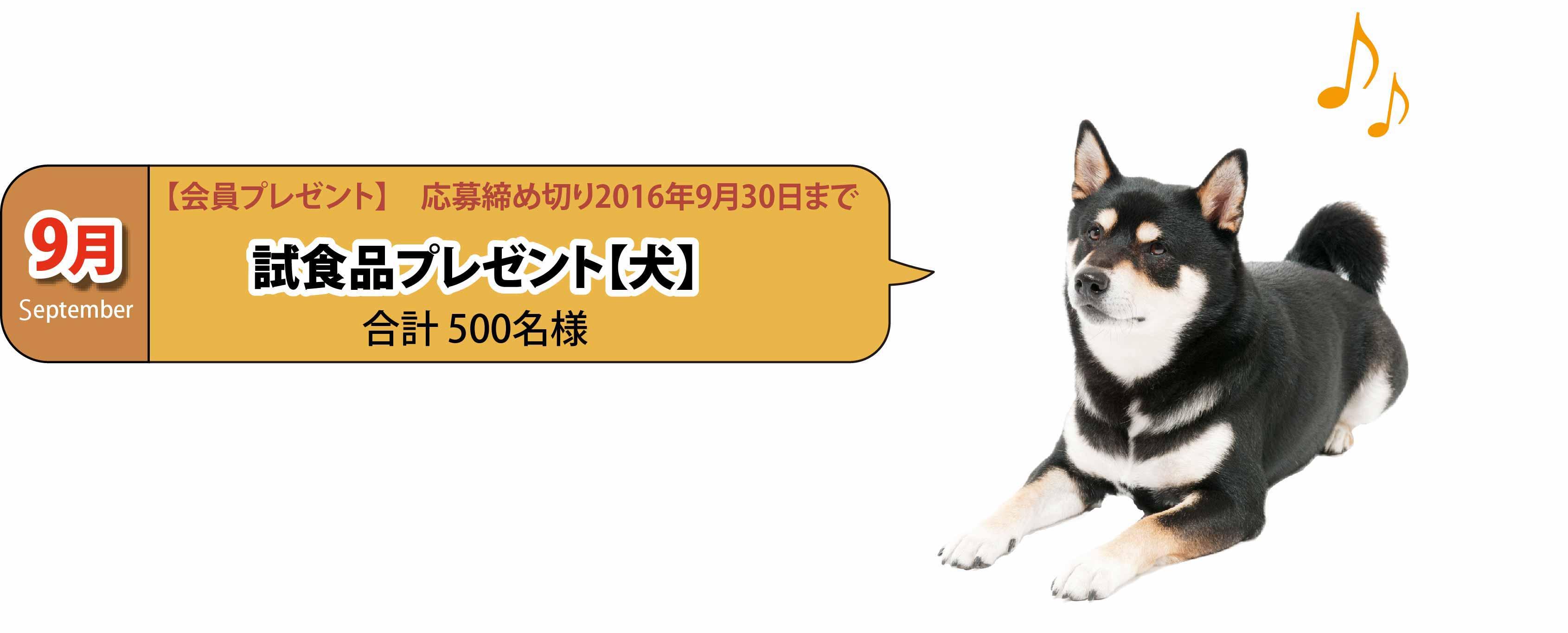 九月犬試食品
