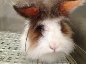 rabbit 3 (4)