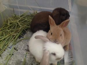 仔ウサギ3羽
