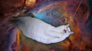 cat_wp02