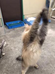 ネコじゃらし8