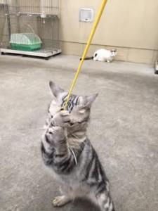 ネコじゃらし14