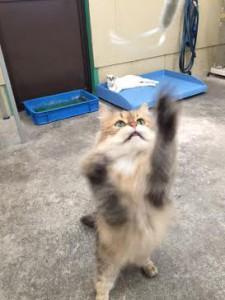 ネコじゃらし7
