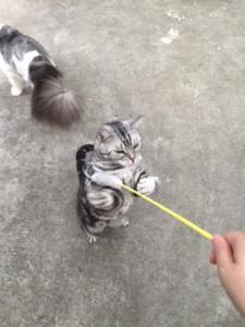 ネコじゃらし1
