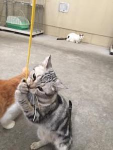 ネコじゃらし15