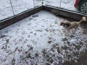 雪とカブ1