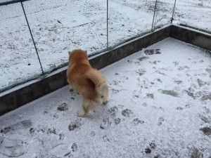 雪とタロウ4