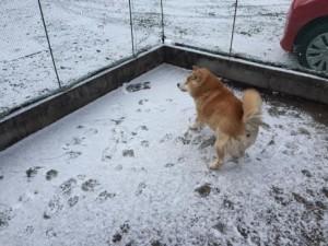 雪とたろう