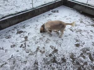 雪とカブ2